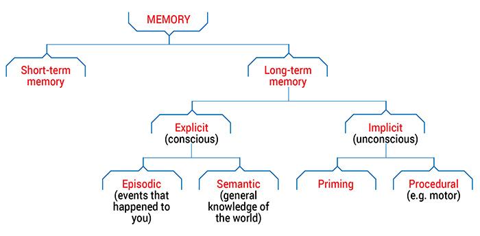 How To Improve Child U0026 39 S Working Memory